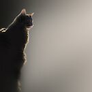 Cat and sun by Christina Brundage