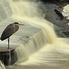 F.Scott Heron by borettiphoto