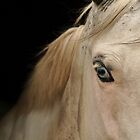 Those Eyes by borettiphoto