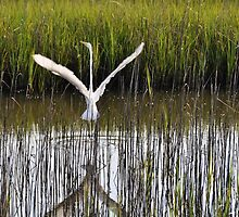 Symphony Of The Reeds by borettiphoto