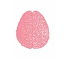 Human Anatomy - Brain Photographic Print
