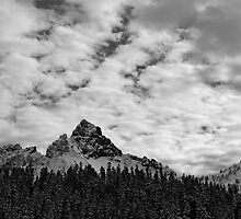 Mount Rainier National Park by North22Gallery