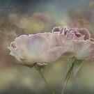 Vintage  Roses by Linda Cutche
