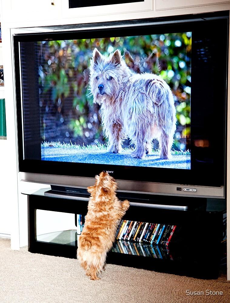 Tv Dog verses Real Dog by susan stone