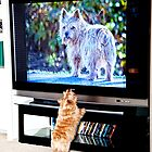 Tv Dog verses Real Dog by susan stone