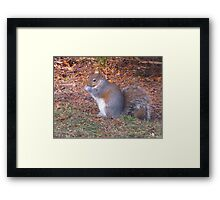 Bright-eyed and bushied-tailed Framed Print