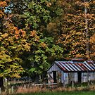 Work Shed Amongst The Trees by jules572