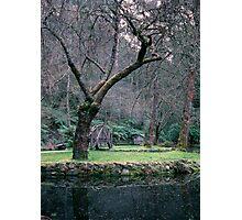 Little house on the lake, Burnham Beeches. Photographic Print