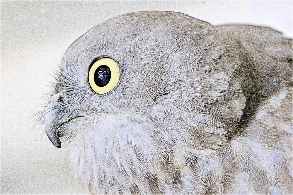 Keen-eyed Raptor. by Frank  McDonald