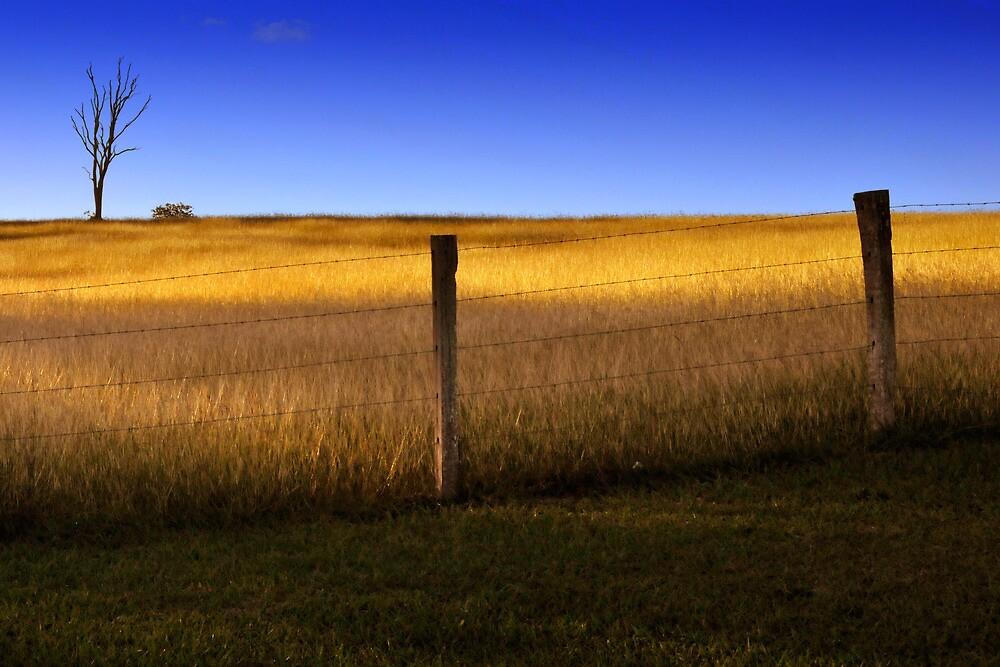 Dayboro - Fence and tree. by Frank  McDonald