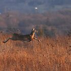 "Deer ""in-flight"" :) by Alinka"