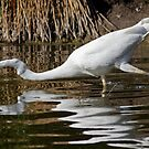Egret by Bill  Robinson