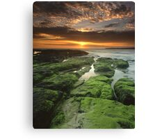 """Symphony of the Sun"" ∞ Shellharbour, NSW - Australia Canvas Print"