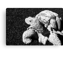 Stone Turtle Canvas Print