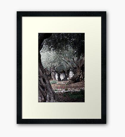 The Garden of Gethsemane, Jerusalem Framed Print