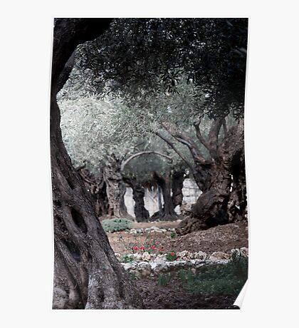 The Garden of Gethsemane, Jerusalem Poster