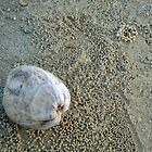 Mission Beach Cocoanut And Crab Balls by STHogan