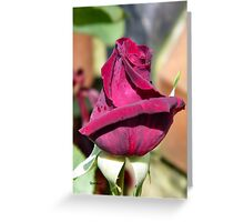 A Rose for Valentines Greeting Card