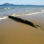 Mission Beach Washed Up Log by STHogan