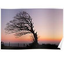 Half a tree on Raddon Top Poster