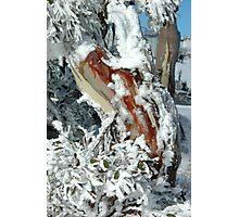snowgum 1 Photographic Print