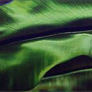 Green Leaf by Chris Cohen