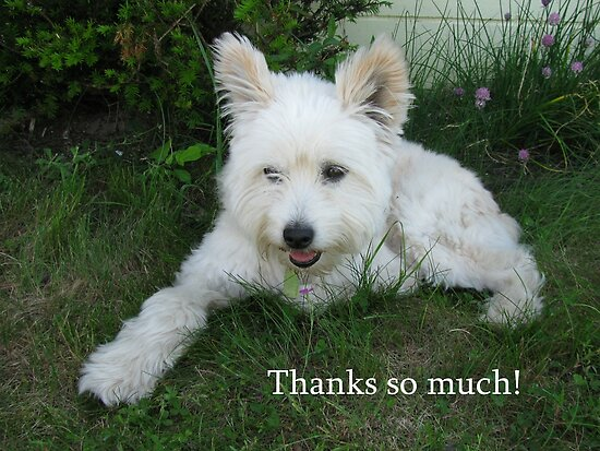 Thanks so much! by Jan Morris