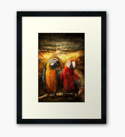 Animal - Parrot - Parrot-dise Framed Print