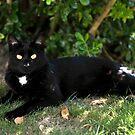 Black Cat by Pete  Burton