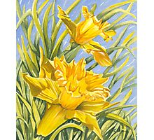 Daffy-down-Dilly Photographic Print