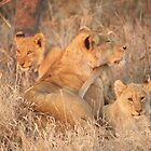 Lioness and cubs by Jane Horton