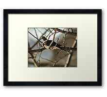 Mourning Dove, New Year's Day Framed Print