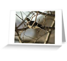 Mourning Dove, New Year's Day Greeting Card