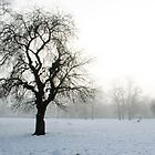 Snow Covered Park In Morning Sun by SDSBerry