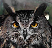 Owl Eyes : Eagle Owl by AnnDixon