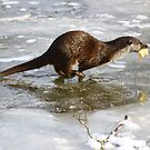 a running otter by Brett Watson Stand By Me  Ethiopia