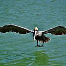 Pelican Wing Span by Paulette1021