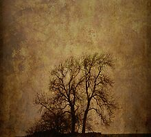 Tree - Fine Art by David Tait