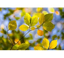 Sunlit Autumn Leaves Photographic Print