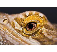 Bearded Dragon. Photographic Print
