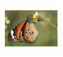 Butterfly with a Flower. Art Print