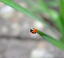 Ladybird Again by Queenicorn