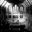 London - Natural History Museum - Main Hall by rsangsterkelly