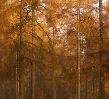 Autumn Larch by Anne Gilbert