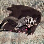 Mya Seven Week Old Sugar Glider by Misty Lackey