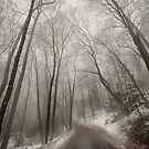 Road to Winter by Karol Livote