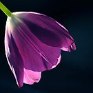 Aria En Violet by LavenderMoon
