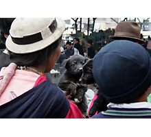 Dog, Ecuador Photographic Print