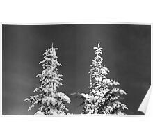 Two Pines in Black and White Poster