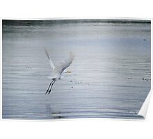 White Egret Flying Poster